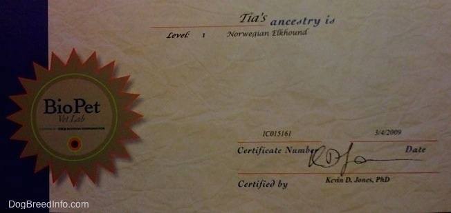 Tia the Norwegian Elkhound certificate of ancestry
