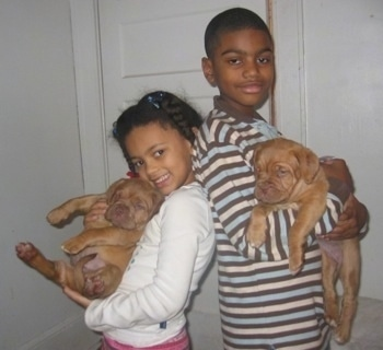 Marquel and Courtney holding Two Dogue De Bordeaux puppies, while standing back to back
