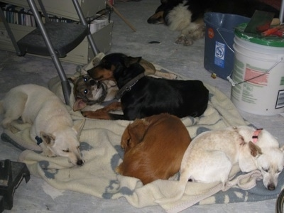 Kahlua, Skooter, Junior, Shirley and Skyy.