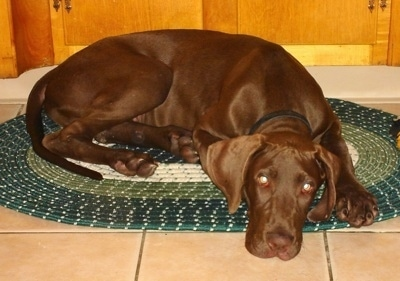 A chocolate Great Dane is laying on a green throw rug in front of a wooden cabinet