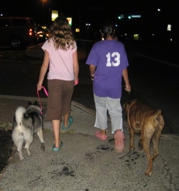 The back of two girls that are leading a black, grey and white Norwegian Elkhound and a brindle Boxer on a walk at night.