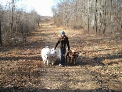 Amie walking Allie and Bruno the Boxers as well as Tundra and Tacoma the Great Pyrenees down a pipeline
