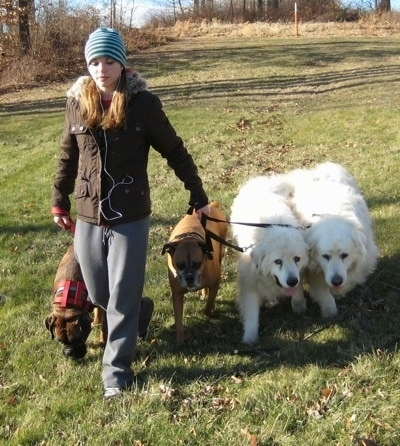 Amie on a pack walk with the dogs