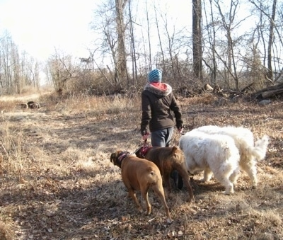 Amie walking Allie and Bruno the Boxers as well as Tundra and Tacoma the Great Pyrenees down a path on a pipeline