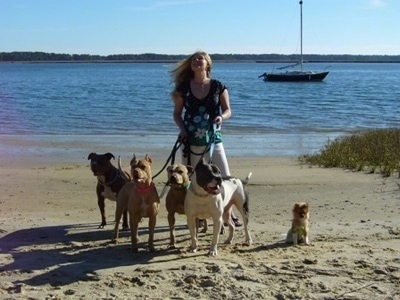 A lady with blonde hair is holding the leash of Four Pit Bull Terriers and a Pomeranian at a beach.