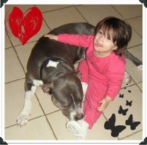 The front left side of a black with white Pitbull Terrier laying on a tiled floor next to a child overlayed on the image is a hand drawn heart in the top left and in the bottom right is 8 butterflies