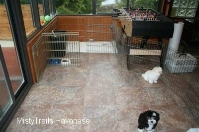 Two puppies are sitting on a tiled floor and they are walled in by a cage
