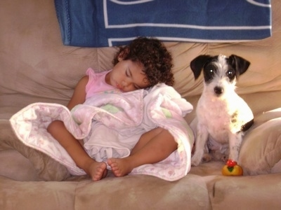 A black and white Ratese dog is sitting on a couch and it is looking forward. Next to the dog is a sleeping toddler wrapped in a blanket.