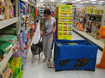 A girl in a grey shirt is leading a black, grey and white Norwegian Elkhound down an aisle at a pet store.