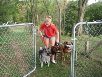 A blonde-haired girl is holding back three dogs from walking through an open gate.