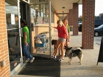 A blonde-haired girl is holding a door open and a person is walking through. There is a dog on each side of her and she is making them wait before they can go in. There is a second person in a green shirt walking into the store and a third person behind the girls waiting to go in.