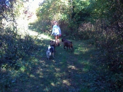A blonde-haired girl is leading three dogs on a walk on a trail through a wooded area.