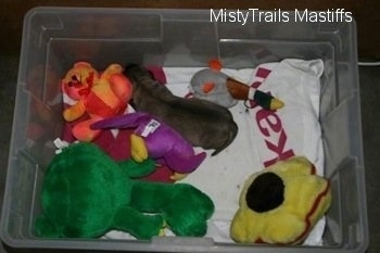 Puppy laying on a blanket in a plastic bin surrounded by plush toys