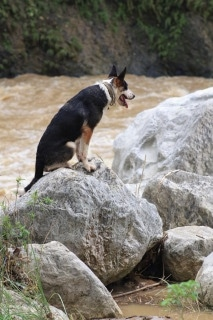 Hitman the Panda Shepherd is sitting on a boulder surrounded by water