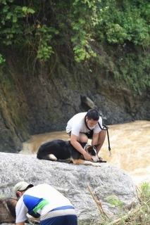 Hitman the Panda Shepherd is laying on a large boulder and his owner is putting a leash on him with rushing water beside them.