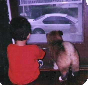 The back of a tan with black Akita puppy that is looking out of a window with a young boy sitting next to him