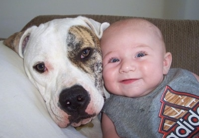 Trinity the American Bulldog and a baby lay face to face on a pillow on a couch