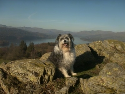 Meg the Bearded Collie sitting in the middle of a rock structure with a good view and water in the background