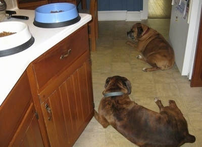 Allie and Bruno the Boxers laying in a kitchen