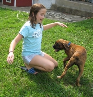 training your new puppy or dog training dogs basic commands training dogs 300x313