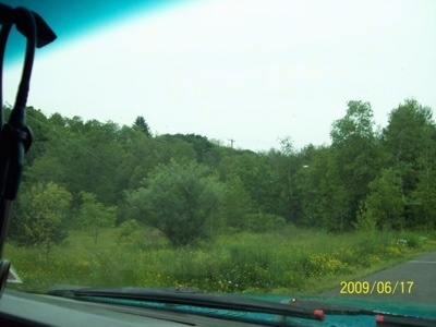 The trees and Greenery in Centralia