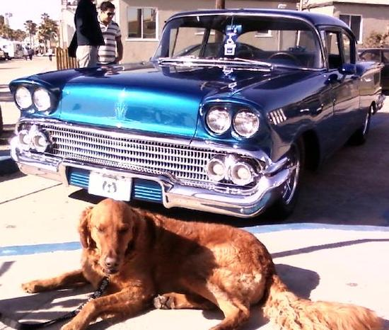A large, drop-eared, short coated, red mixed breed dog  is laying on a sidewalk in front of a teal-blue old classic 1958 Chevy antique car.
