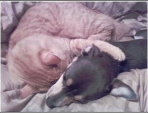 Close Up - Hercules and a cat are cuddled together on a bed