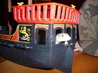 An Egyptian skink is laying inside of a Pirate Ship toy.