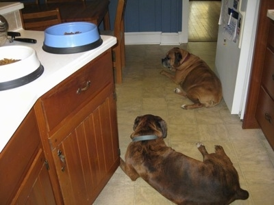 Bruno the Boxer and Allie the Boxer laying on the kitchen floor