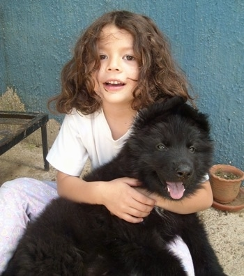 A black with a tuft of white German Shepherd puppy is laying in he lap and being hugged by a child who is smiling.