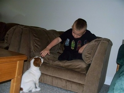 A boy is sitting on a brown couch and it has its hand over the head of a white with red Olde English Bulldogge puppy who is sitting on the floor and looking up at the boy.
