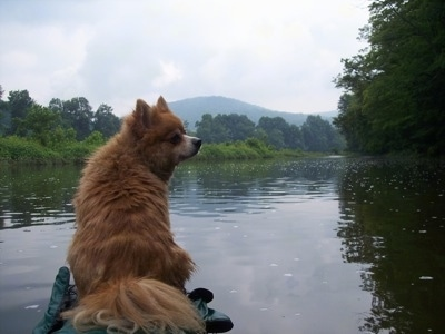 Marley at 3 years old weighing 17 pounds kayaking.