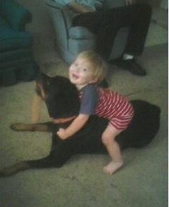A toddler-sized child in a red striped onesie is laying on the back of a black and tan Rottweiler dog. There is a person sitting on a couch in the background.