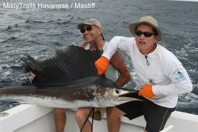 Two men are sitting on the edges of a boat and they are pulling on a fish with a large fin and long skinny mouth (sailfish). The fish is huge, as large as the humans.
