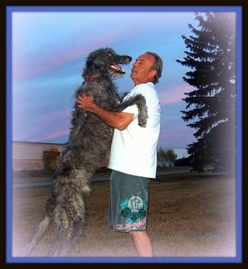 A black with grey Scottish Deerhound is standing up against a person in a white shirt. The dogs mouth is open and tongue is out. They are standing in a field. The dog is taller than the man.