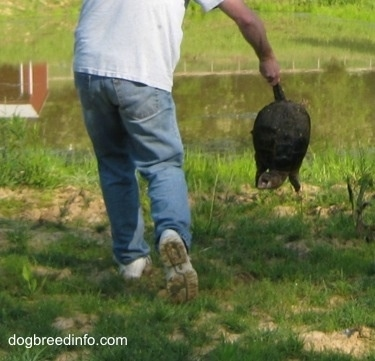 A Snapping turtle with its mouth open is being held by a person.