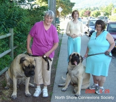 Three people standing on a sidewalk outside with Two Mastiffs sitting with them