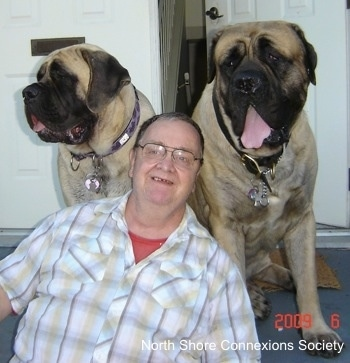 Two Mastiffs and a Person are sitting in front of a door at the top of stairs