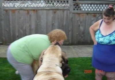 The Lady in Green is hugging One Mastiff and Another Mastiff is licking her face as the Lady in Blue watches