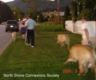 Three people are walking the Three Mastiffs back to the car at the end of the night