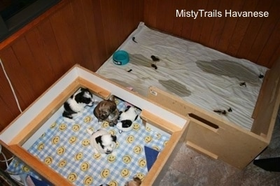 Top down view of five puppies in the sleeping area of a whelping box. There is a second room behind that area with puppy pee and poop.