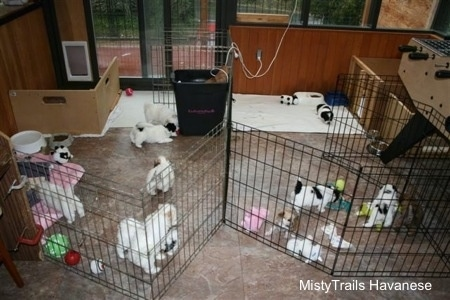 Whelping and raising puppies puppies 6 weeks 7 weeks for Breeding kennel designs