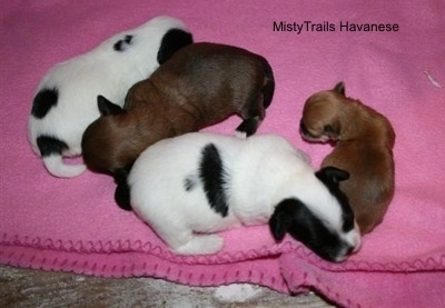 Preemie and his sisters at 2 weeks old.