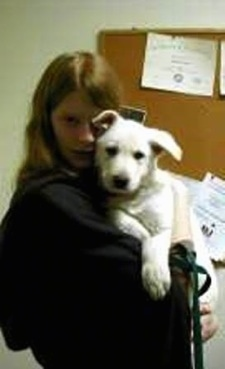 Nimrodel the American White Shepherd as a puppy being hugged by a person