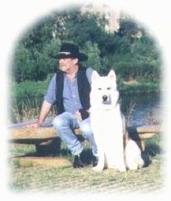 Alaskan Malamute Timber Wolf Hybrid