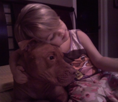 A red nose American Pit bull Terrier is laying next to a child that is hugging it.