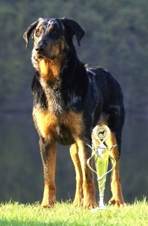 Azira Le Coeur Pur the Beauceron standing outside next to a trophy