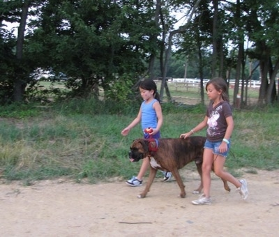 Two children walking Bruno the Boxer at a horse rodeo