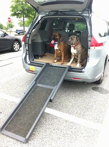 Ramp leaning on the back of a van with Bruno the Boxer and Spencer the Pit Bull Terrier sitting in the back of the van with the hatch open