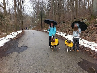 Bruno the boxer and Spencer the Pit Bull Terrier wearing raincoats standing with a couple of girls on a paved walking trail